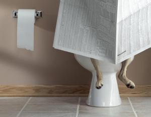Hi-Res%20Dog%20On%20Toilet_full